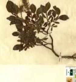 herbier pyrénées ramond