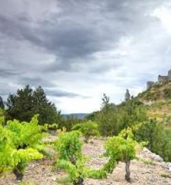 Aguilar - Sentier Cathare