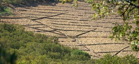vignoble collioure banyuls