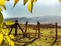 Pastoralisme en Pays Basque